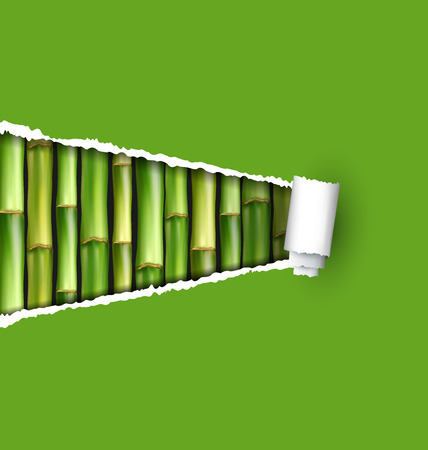 grove: Green bamboo grove with ripped paper frame isolated on white background