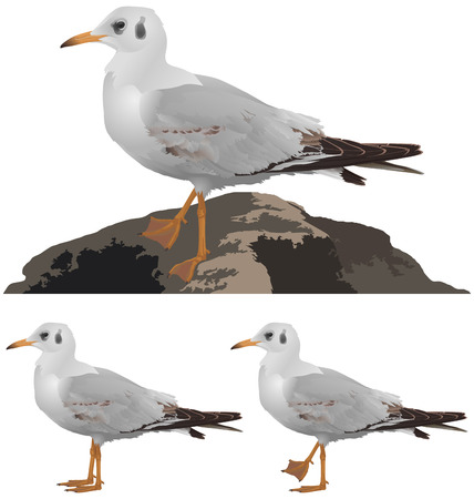 seagulls: Set of seagulls isolated on white background