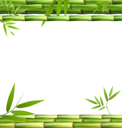 Green Bamboo Grass Isolated on White Background