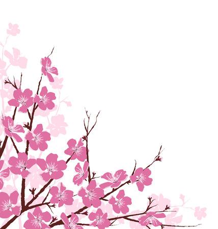 fleur cerisier: Branches avec des fleurs roses isolé sur fond blanc