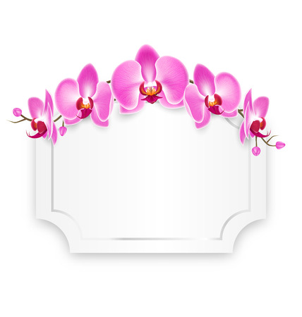 pink orchid: Pink Orchid Flowers with Celebration Frame Isolated on White Background Illustration