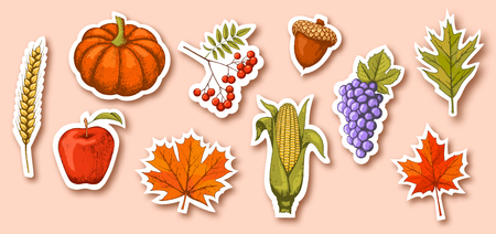 Autumn Seasonal Icons Signs Collection Isolated on Beige Background Illustration
