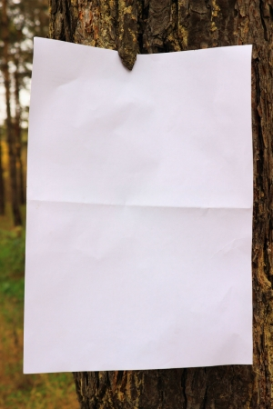 sheet of paper on the trunk of pine photo