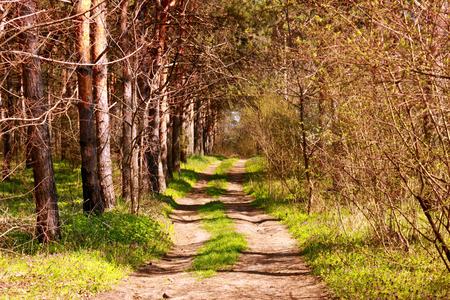 loess: road in the forest