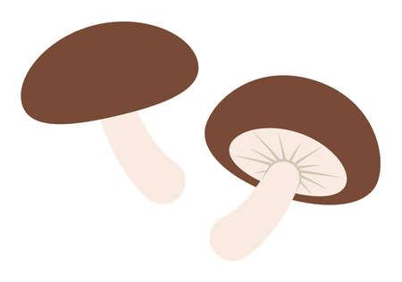 Shiitake mushroom 向量圖像