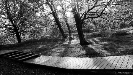 trenches: Moody black and white wooded walkwaay Stock Photo