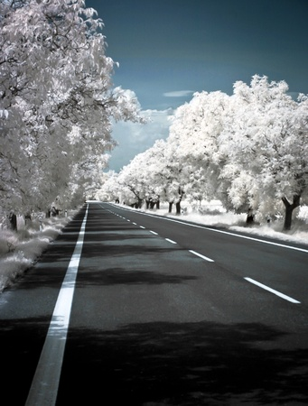 Road in summer photographed in infrared with IR modded camera