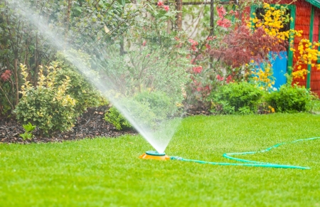 lawn sprinkler: Water sprinkler - Irrigation system - technique of watering in the garden  Lawn sprinkler spraying water over green grass in the garden