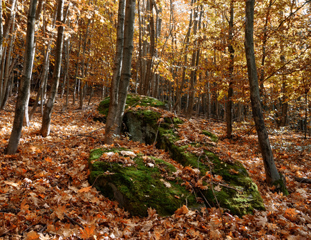 Rocks in the forest blanketed by the leaves of autumn