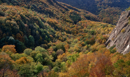 Mountain autumn landscape with colorful mixed forest