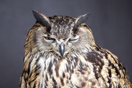 Closeup picture of winking eagle owl photo