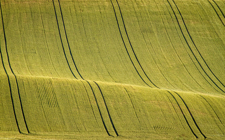 Wavy agricultural spring field with young wheat and tracks Moravian Fields - an area called the Moravian Tuscany, Czech republic, Europe Stock Photo