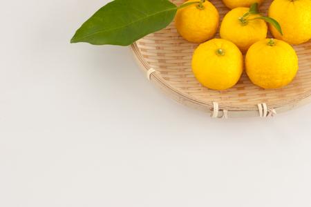 Yuzu , Citrus junos fruit and plant