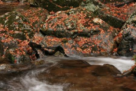 これは、日本の渓谷の紅葉です。