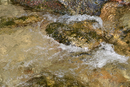 spruit: stone in water