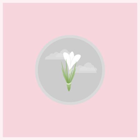 봄 꽃 평면 아이콘입니다. 분홍색 배경에 회색 동그라미에서 Srocus 꽃입니다. 일러스트