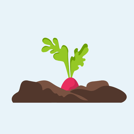 Root of redish in soil on blue background isolated. Flat plant illustration.