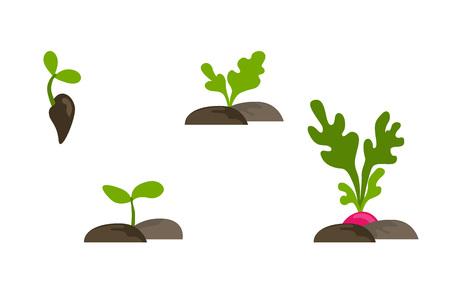 벡터 단계 집합 식물 성장 개체 플랫 집합입니다. 씨앗, 새싹과 뿌리가 붉게 격리 된 토양에서.