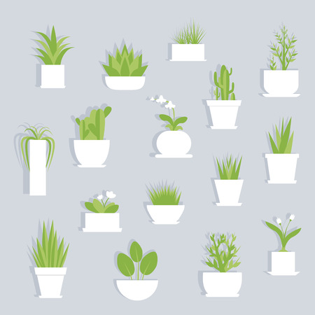 관엽 식물 절연 평면 집합 벡터. 회색 배경에 그림자와 흰 꽃 냄비에 식물. 일러스트