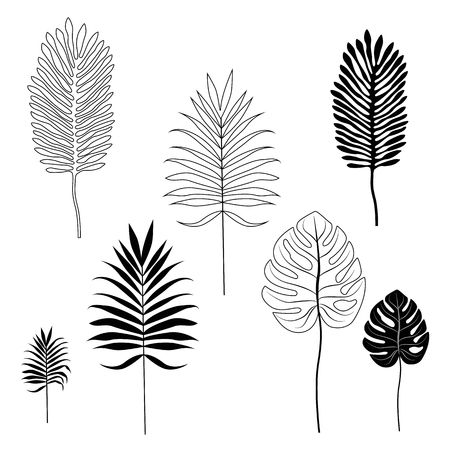 Silhouettes of tropical leaves. Set of object isolated on white background.