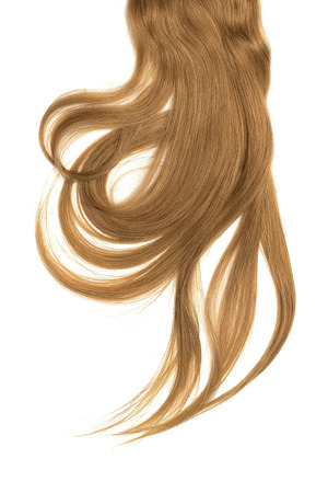 Brown hair, isolated on white background. Long and disheveled ponytail