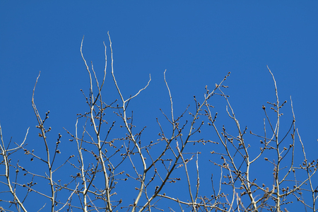 Tree branch against blue sky with copy space for background.