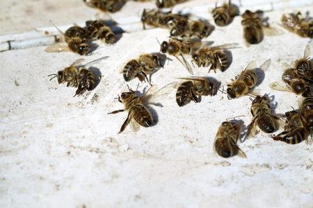 dead bees in front of beehive after winter 스톡 콘텐츠