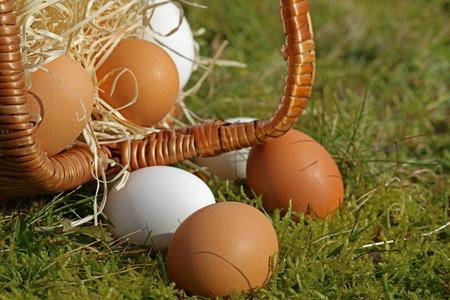 eggs close-up from overturned basket in the moss Reklamní fotografie
