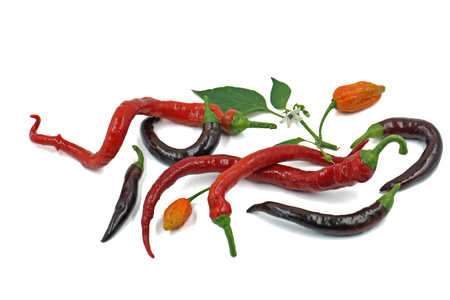 Chili pepper selection with leaf and blossom on white background