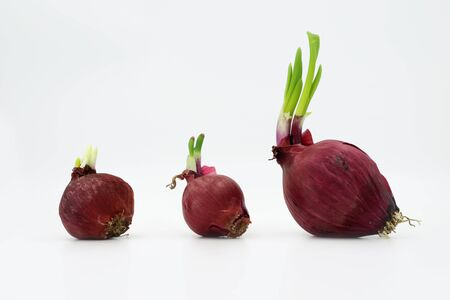 three red onion isolated on white background Banque d'images