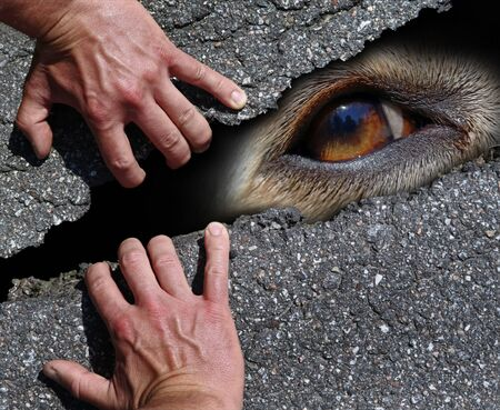eye of a white dog behind a street surface with male hands which save him, concept of homeless stray dogs saved by human