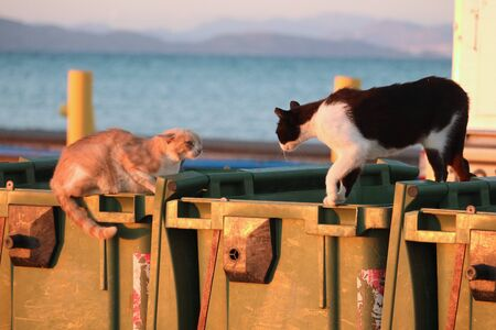 stray cats in greece, kos fighting in the sunset on garbage cans.
