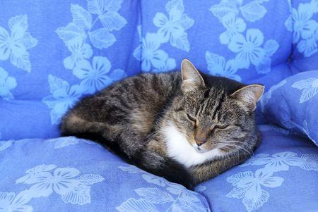 Cat relax Фото со стока