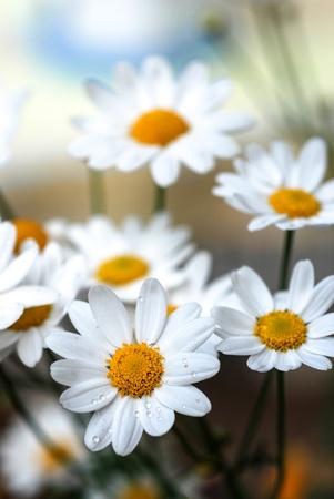 whitw: White flower