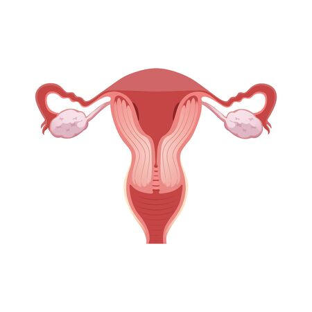 Illustration of female reproductive system. Human anatomy 写真素材 - 129792503
