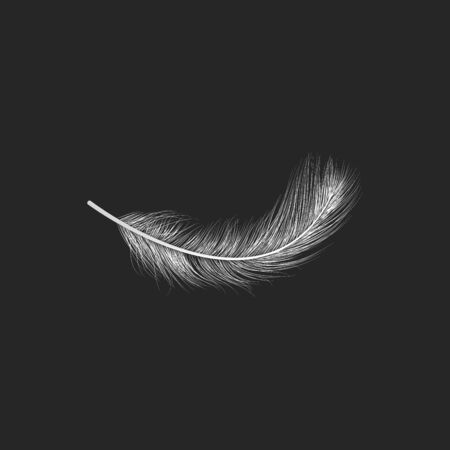 Vector illustration of realistic white feather on black background. Easy editable layered vector illustration