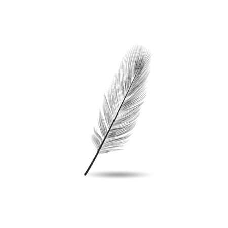 Vector illustration of realistic black feather on white background. Easy editable layered vector illustration Ilustrace