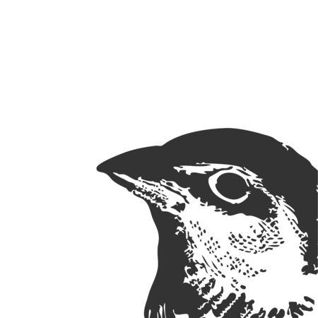 Myrtle Warbler is a small New World warbler, vintage line drawing or engraving illustration