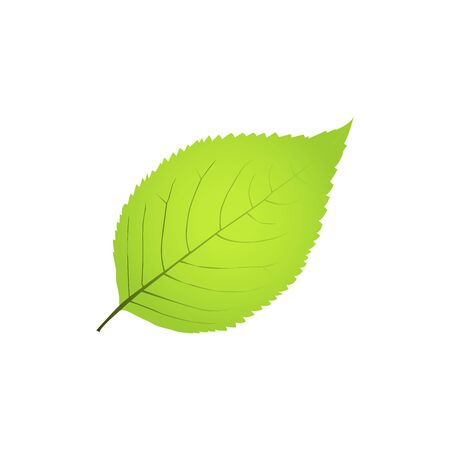 Green leaf isolated on white background ECO stock vector illustration.