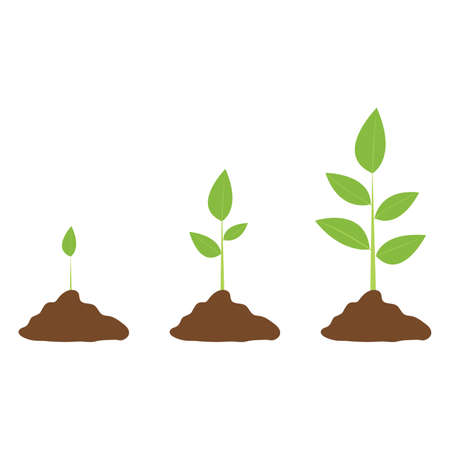 Stages of cultural development. Infographics of tree planting. Concept of evolution. Sprout, plant, tree plant growing