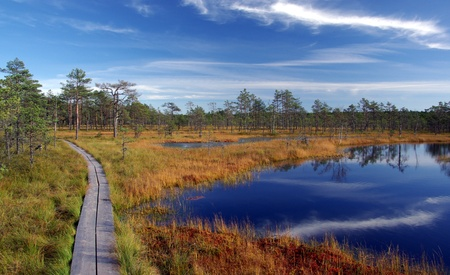 Swamp Viru raba in Estonia.The nature of Estonia.