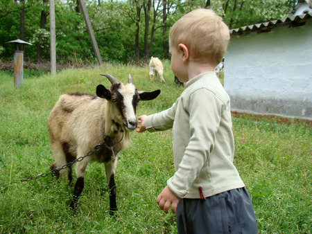 not give: Boy feeding a goat on the lawn Stock Photo