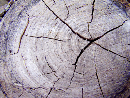 heartwood: cracks on the stump broken wood annual rings of a tree