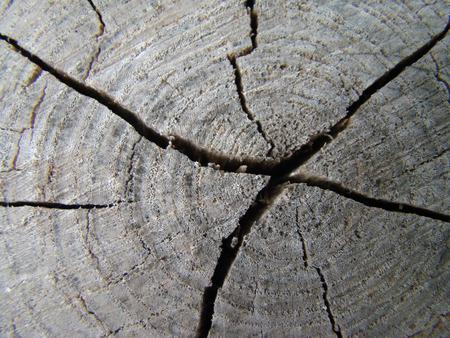 duramen: grietas en la madera tocón roto anillos anuales de un árbol