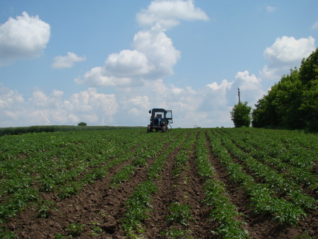 the tractor with the door open standing in a potato field in anticipation of his master Фото со стока