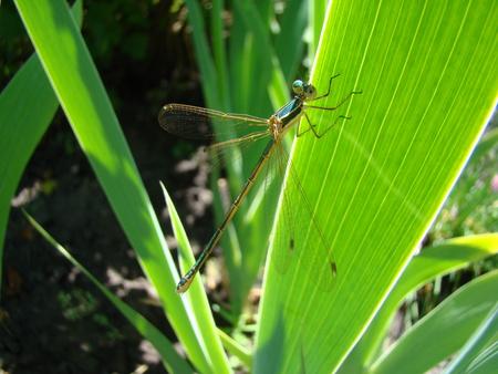 ephemera: dragonfly day sitting on a green leaf,basking in the sun