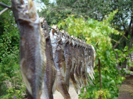 weighs: dried fish dried weighs on the street under the sun.