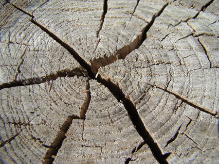 heartwood: cracks on the stump, broken wood, annual rings of a tree