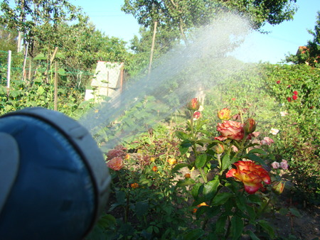 watered: Gun for irrigation,sprinklers for watering the garden,watered manually. Stock Photo