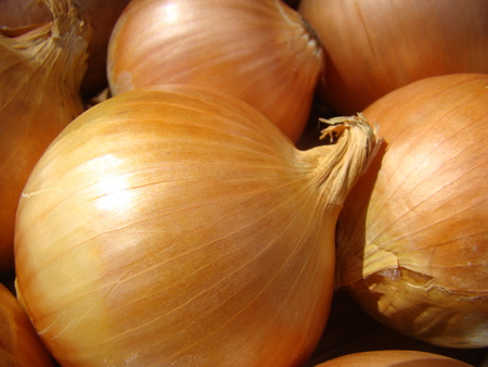widely: onion,a perennial herb widely distributed vegetable culture. Stock Photo